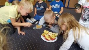obserwujemy-jablko-pzez-lupe-2